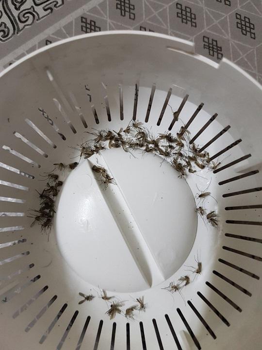 Đèn bắt muỗi Yoobao M108